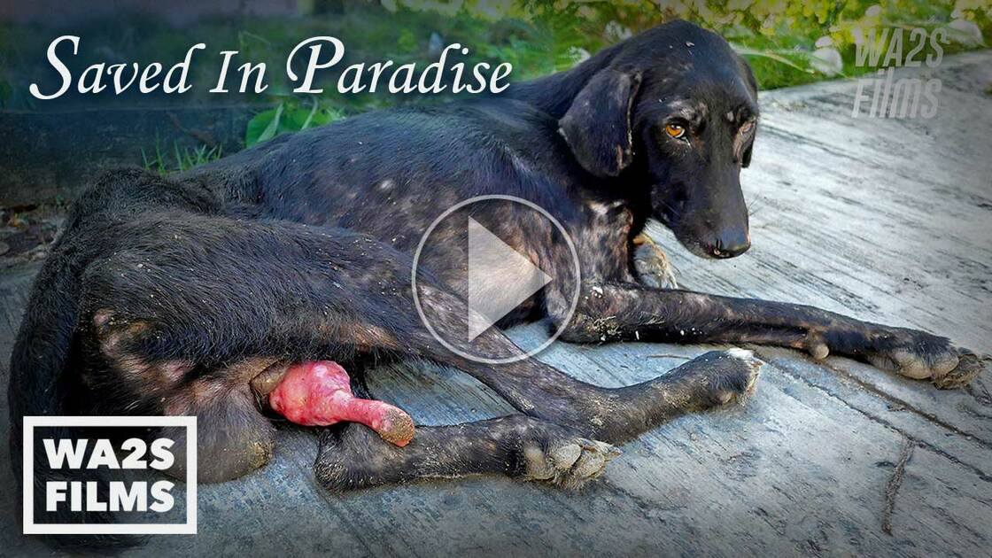 Snipped In Paradise 4 Days 400 Dogs